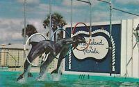 "*Florida Postcard-""3 Porpoises (Small Whales) Leap Thru Loop"" /Marineland/"