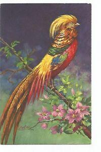 ILLUSTRATION OISEAUX , BIRDS , PERRUCHE PERROQUET