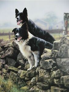 Steven Townsend Ltd Edition Print Sheep Dogs RARING TO GO 382/650 Retail is £800