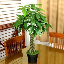 Pachira Aquatica Money Tree 10 Seed Professional Package Lucky Plant Rich