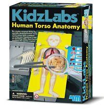 4M Kidz Labs HUMAN TORSO ANATOMY Educational Organs Science Kit 8+