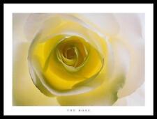 Andrew Olney The Rose poster immagine stampa d'arte con telaio in alluminio in nero 60x80cm