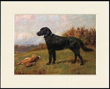 FLAT COATED RETRIEVER LOVELY LITTLE DOG PRINT READY MOUNTED