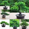 Fake Artificial Plant Bonsai Potted Simulation Pine Tree Home Office Decor Gift