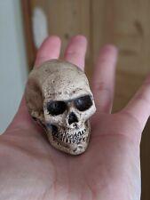 1/4 Scale Resin Human Skull Replica