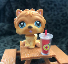 Authentic Littlest Pet Shop Chow Chow Dog #117 Tan Brown With Blue Eyes Lps