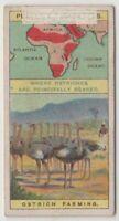 Ostrich Farming Africa Bird Feathers Australia 100+  Y/O Ad Trade Card