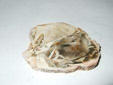 - Fossili - LEGNO FOSSILE (39) madagascar