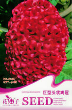 Original Package 40 Giant Head Shaped Cockscomb Seeds Celosia Cristata Seed A256