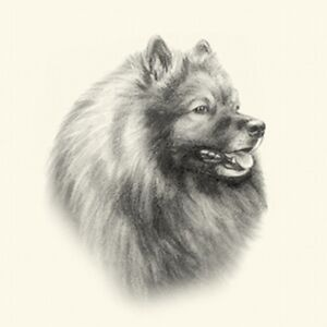 Dog Show Ring Number Clip Pin Breed - Keeshond