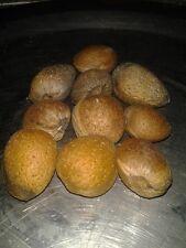 Rare * Prunus Dulcis Variety Padre * Padre Sweet Almond * 5 Seeds