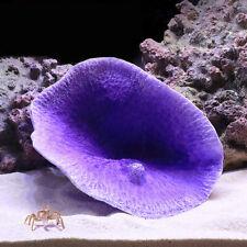 Simulation gefälschte Korallenriff Blatt künstliche Pflanze Aquarium Ornament