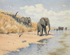 Kuhnert Wilhelm Elephants On The River Bank Print 11 x 14    #8955