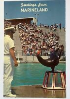 Marineland Of The Pacific California Vintage Postcard Southern California Seal