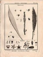 LAMARCK 1823 Antique Engraving: MANICARIA Palm tree Botanical Plant Decor