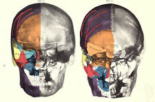 Framed Print - X-Ray Atlas of the Human Skull Plate (Picture Poster Medical Art)