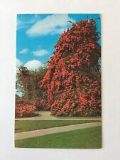 Bougainvillea Florida Cypress Gardens Postmark 1973 Posted Postcard