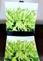 CB2 (Crate & Barrel) China Square Appetizer Dessert Plates x2 Green Floral
