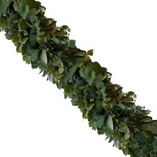 Garland Variegated Pittosporum and Green Ivy - 75 ft.