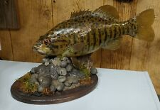 New listing Smallmouth Bass Reproduction Mount Taxidermy Habitat Cabin