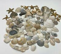 Lot of Seashells Different Species Starfish Crafts Decor Aquarium Over 3 Pounds
