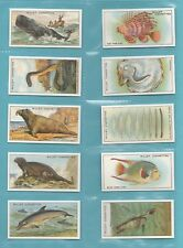 SEA  -  C.C.S.  -  WILLS  -  SET  OF  50  WONDERS  OF  THE  SEA  CARDS   (REPRO)