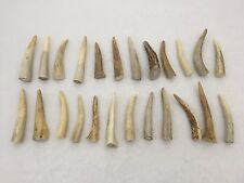 "24 Pack - Deer Antler Points, Tips, Crafts, Taxidermy - 2.5"" to 4"" in Length"