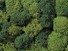 NOCH 08621 Mousse décorative, lumière et vert foncé, 75g, 100g =
