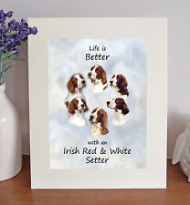 "Irish Red & White Setter Life is Better 10""x8"" Mounted Picture Image Lovely Gift"