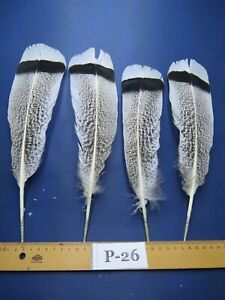 2 pairs Pencilled Turkey Tail  Feathers (Long 18-22cm/Fiber 45-60mm)**(P-26)