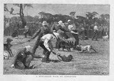 A Menagerie Race at Singapore - Antique Print 1881