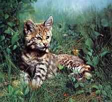 """Charles Fracé  """"Nature's Dawn""""  Bobcat kitten lying in the grass LTD ED  S/N COA"""