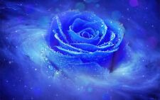 Framed Print - Swirly Neon Blue Rose (Picture Poster Flowers Lily Daisy Lotus)