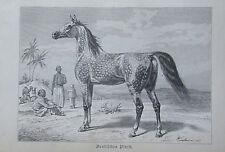 1893 ARABISCHES PFERD alter Druck antique print Litho Brehms Tierleben