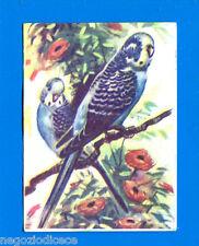 ANIMALI - Lampo 1964 - Figurina-Sticker n. 202 - PAPPAGALLINO D'AUSTRALIA -New