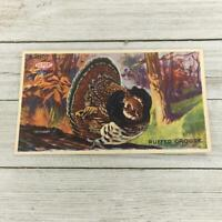 VINTAGE THANKSGIVING DAY TURKEY POST CARD POSTCARD