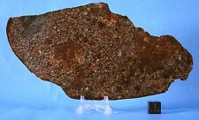 Huge full slice of NWA 869 meteorite with xenoliths one of my last 172x90mm