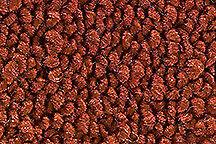Carpet Samples,   Loop!