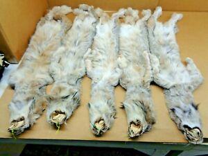 Tanned #1 Grade XL Canadian Lynx/Furs/Trapping/Taxidermy/Crafts/pelt/Fur Trim