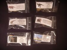 Fossil Collection Dinosaur Bone 6 Different Dinosaur Bone Collection Option 1