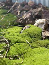 Small Sheet Bonsai Terrarium Live Moss Pack- Lichen, Feather, Pillow, Thread