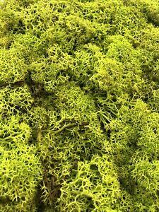 Reindeer Moss   Spring Green Preserved Moss  2oz for Craft & Plants 80g
