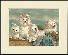 MALTESE DOG GROUP LOVELY LITTLE PRINT MOUNTED READY TO FRAME