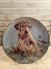 Franklin Mint Eye To Eye Collector Plate Golden Retriever Puppy