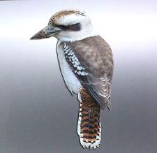 Kookaburra Sticker Vinyl cut Australian made real photo high gloss native animal