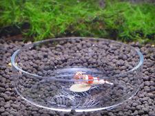 Garnelen Aquarium set Acryl Essen Fütter Dish Platte Zubehör Für Garnelen Shrimp
