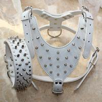 Large Breed Leather Spiked Studded Dog Harness + Dog Collar set Pitbull Mastiff