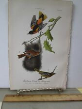 Vintage Print,BALTIMORE ORIOLE,Chromo,Birds of Pennsylvania,Warren,1888