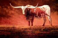 Wall Art Giclee Print Animals Texas Longhorn oil painting Printed on canvas P128