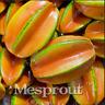 50 Pcs Seeds Carambola Bonsai Star Fruit Averrhoa Carambola Plants Tree Garden X